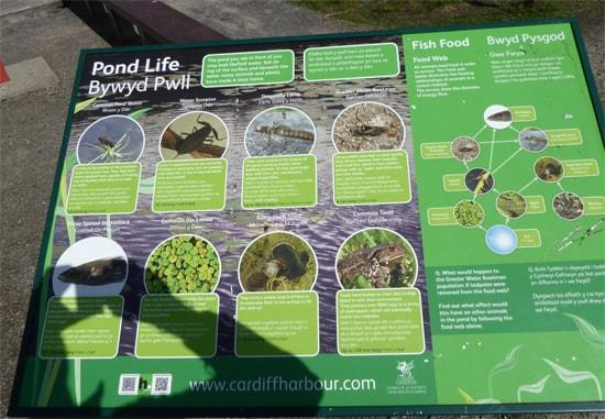 Interpretive signage for the pond life